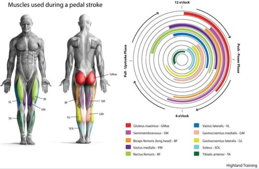 Cycling-pedal-stroke