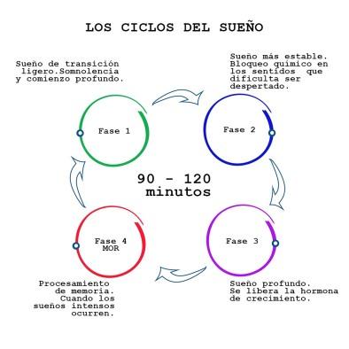 ciclos de sueno